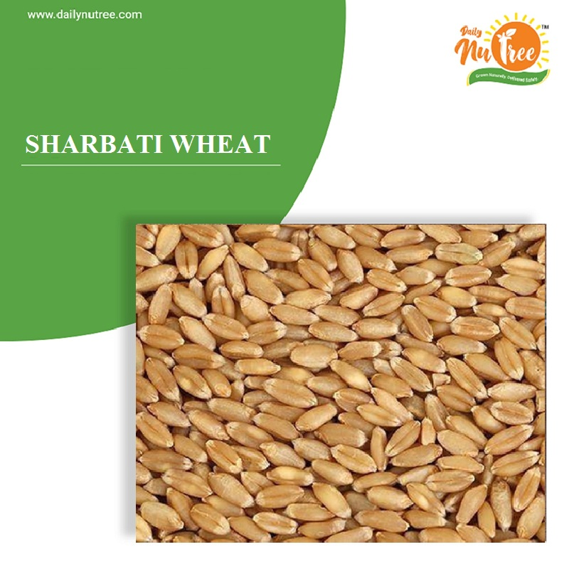 Sharbati Wheat (सीहोर शर्बती गहू)